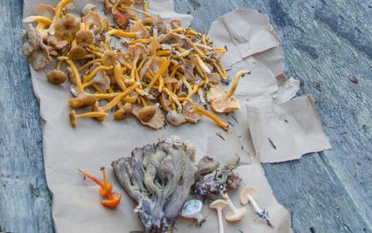 Подготовка грибов к переработке и первичная обработка грибов