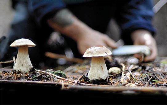 сезон сбора грибов