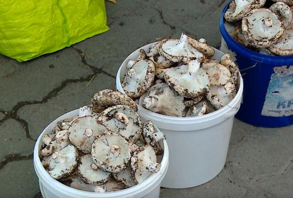 отравление грибами причины
