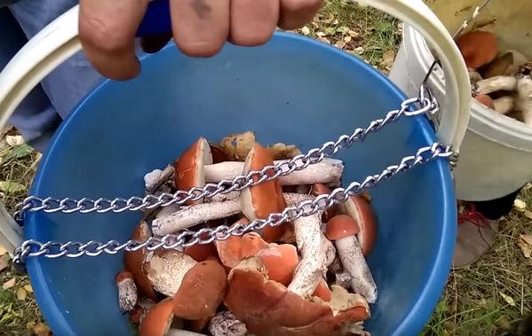 терапия при отравлении грибами